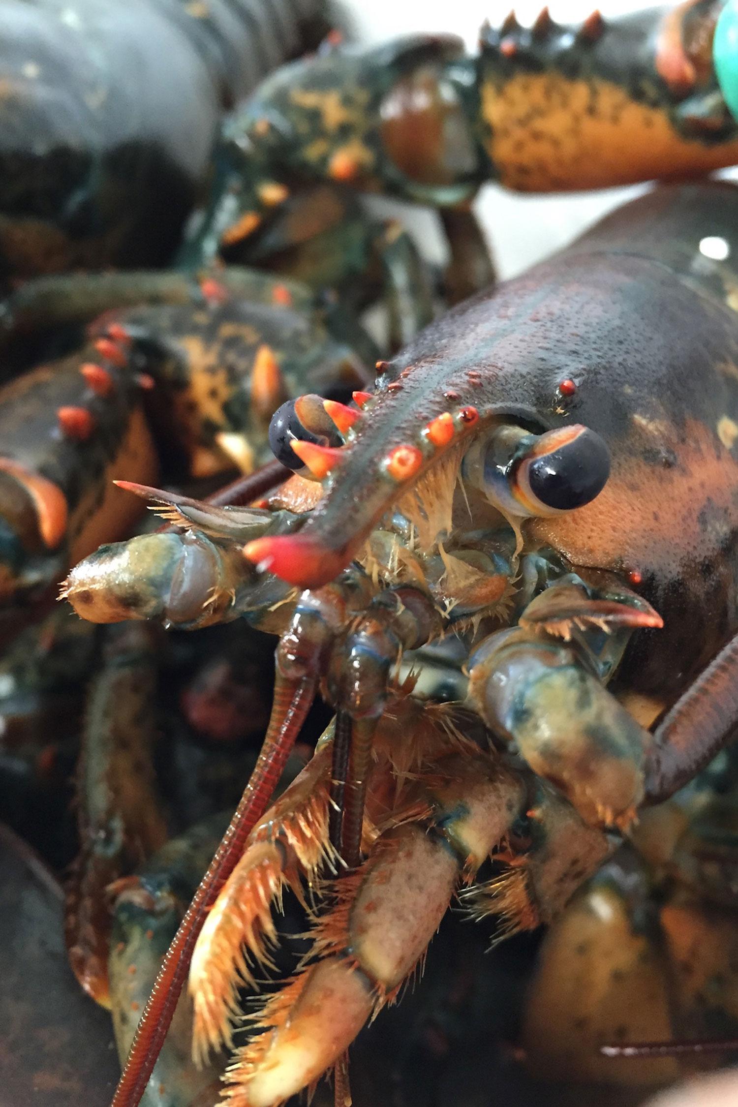 Fisch Kratschmer